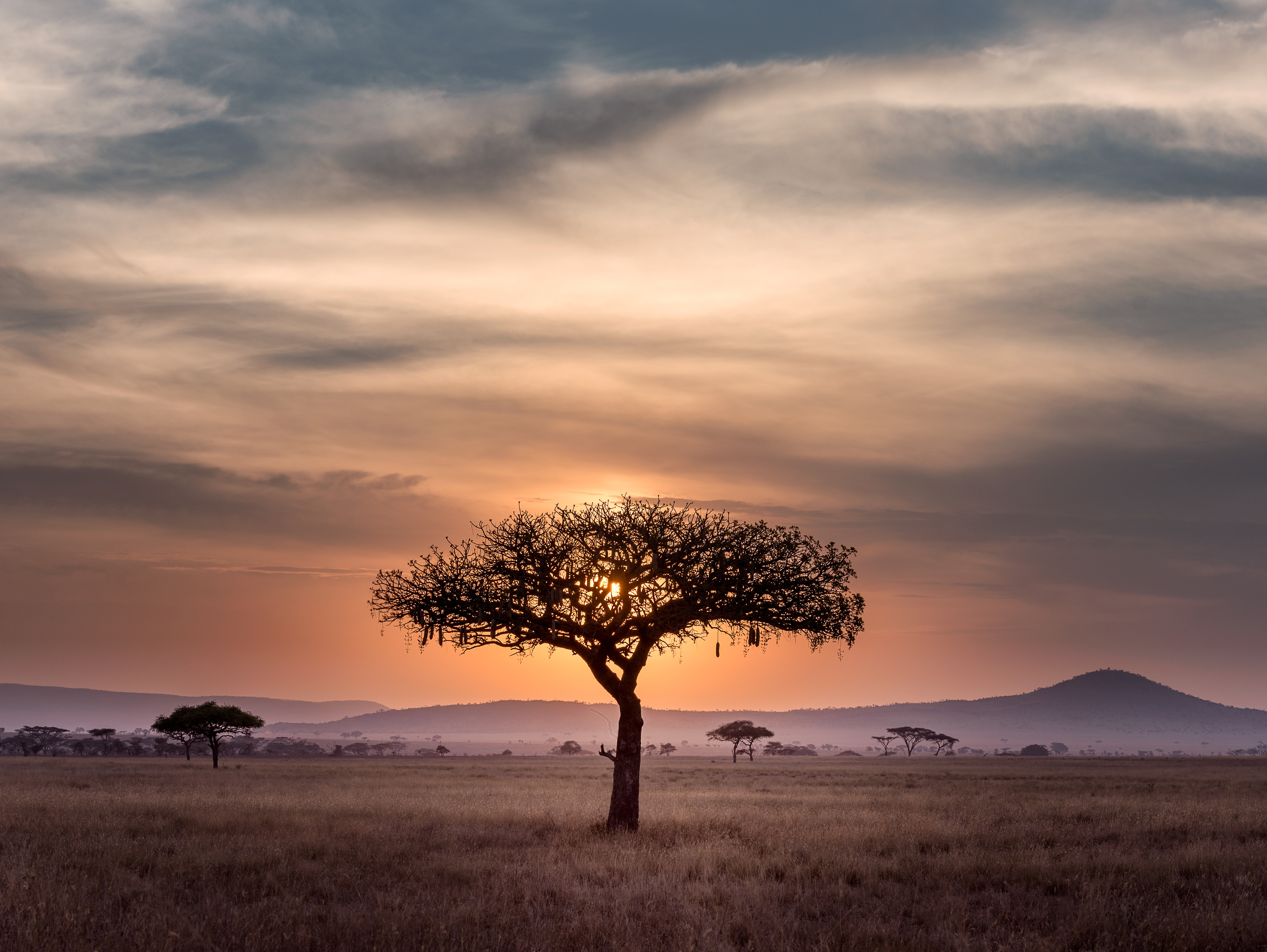On embracing the gifts of Africa